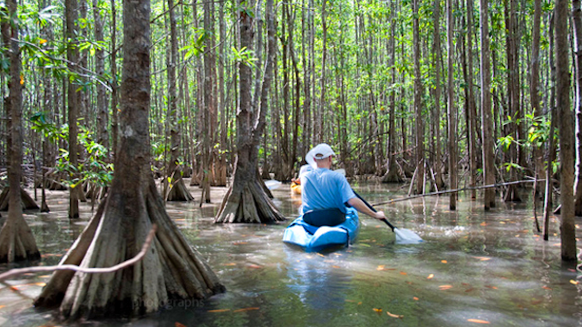 Mangrove Kayak Tour
